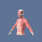 3D Muscles Anatomy - anatomy 3d free app