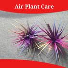 Air Plant Care