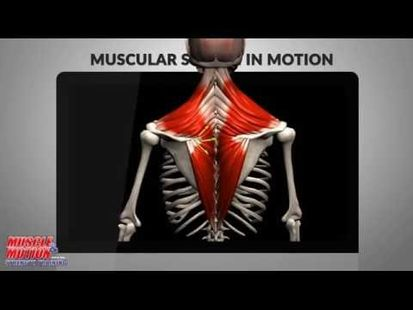 Video Image - Anatomy by Muscle & Motion