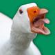Angry Goose Simulator: Goose Rampage Game