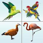 Bird Memory Matching Game