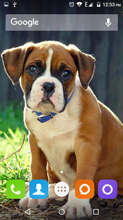 Screenshots - Boxer Dog Wallpapers Hd