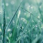 Calm Rain Sounds: Relax,Sleep,Meditate,Anti stress