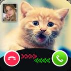 Cat Call You : Cat Video Call & Video Call prank