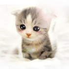 Cute Cat Wallpaper HD APK