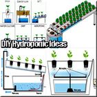 DIY Hydroponic Ideas