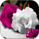 Flowers And Roses Animated Images Gif 4K HD