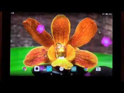 Video Image - Garden Zen Live Wallpaper