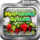 Hydroponic Plant Cultivation