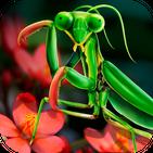 Mantis Life and Hunting Simulator.