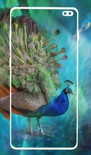 Screenshots - Peacock wallpapers