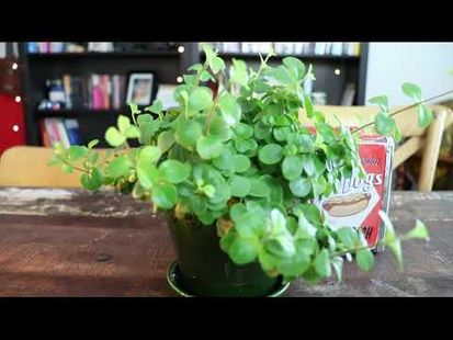 Video Image - Plant water reminders and journals + more - Plantr