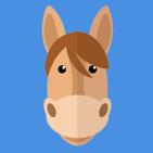 Quizz Horse Poney Horse riding