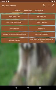 Screenshots - Raccoon Sounds