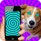 Real Hypnotizer For Dogs