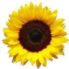 SendFlowers.pk (Online Flower Delivery Pakistan)