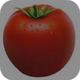 Tomato Kannada