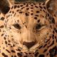 Ultimate Leopard Simulator