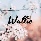 Wallie | Minimal Wallpaper App