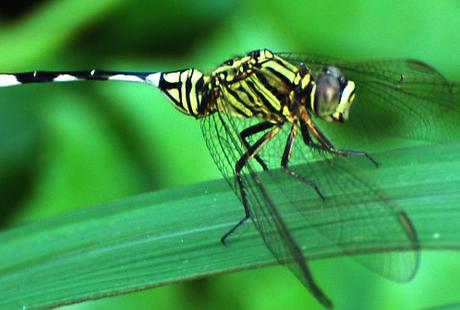 Screenshots - Wallpaper Dragonflies