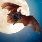 Wild Bat Simulator 3D
