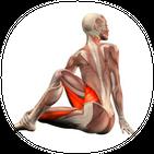 Yoga Anatomy Guide